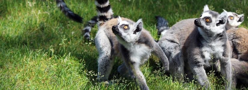 Reisen nach Madagaskar