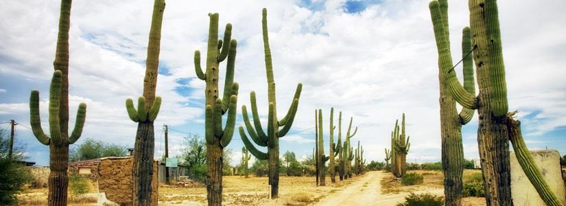 Reiseziel USA - Urlaub in Arizona