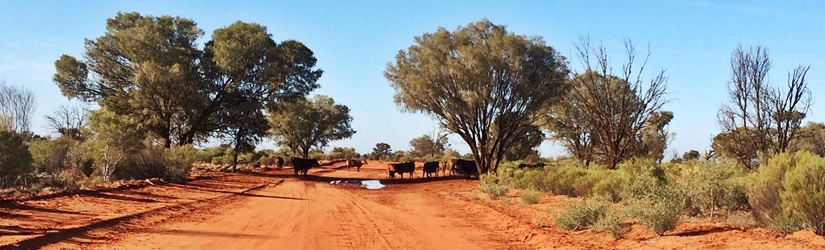 Australien - auf dem Weg ins Outback