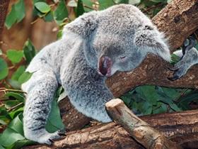 Faszinierende Natur - Urlaub in Australien